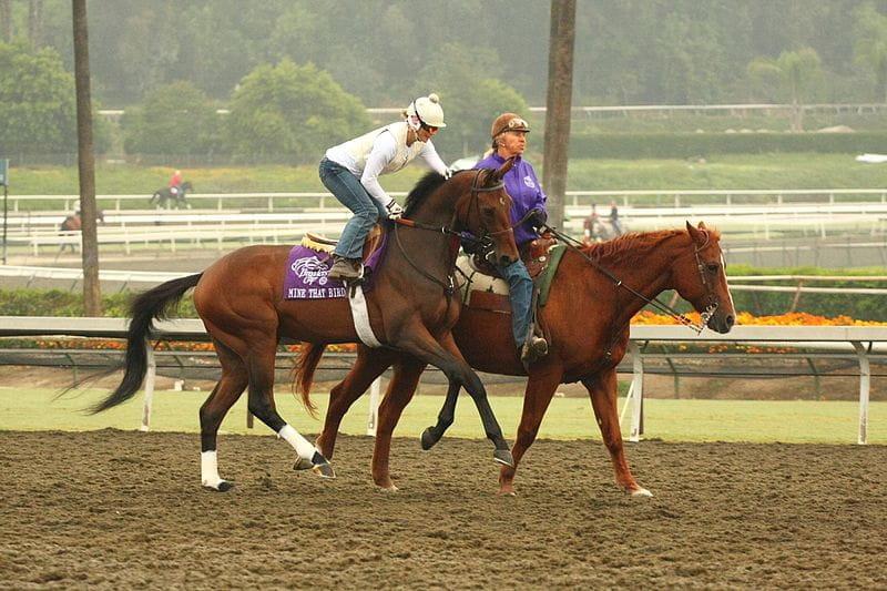 Pferderenntraining im Santa Anita Park, Kalifornien.