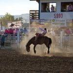 Ein Rodeo-Cowboy auf einem Pferd.