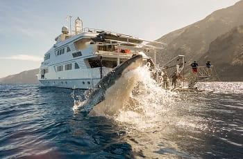 Forscher beobachten einen Weißen Hai bei der Jagd.