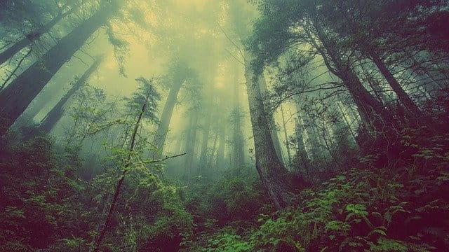 Bäume in der Natur.